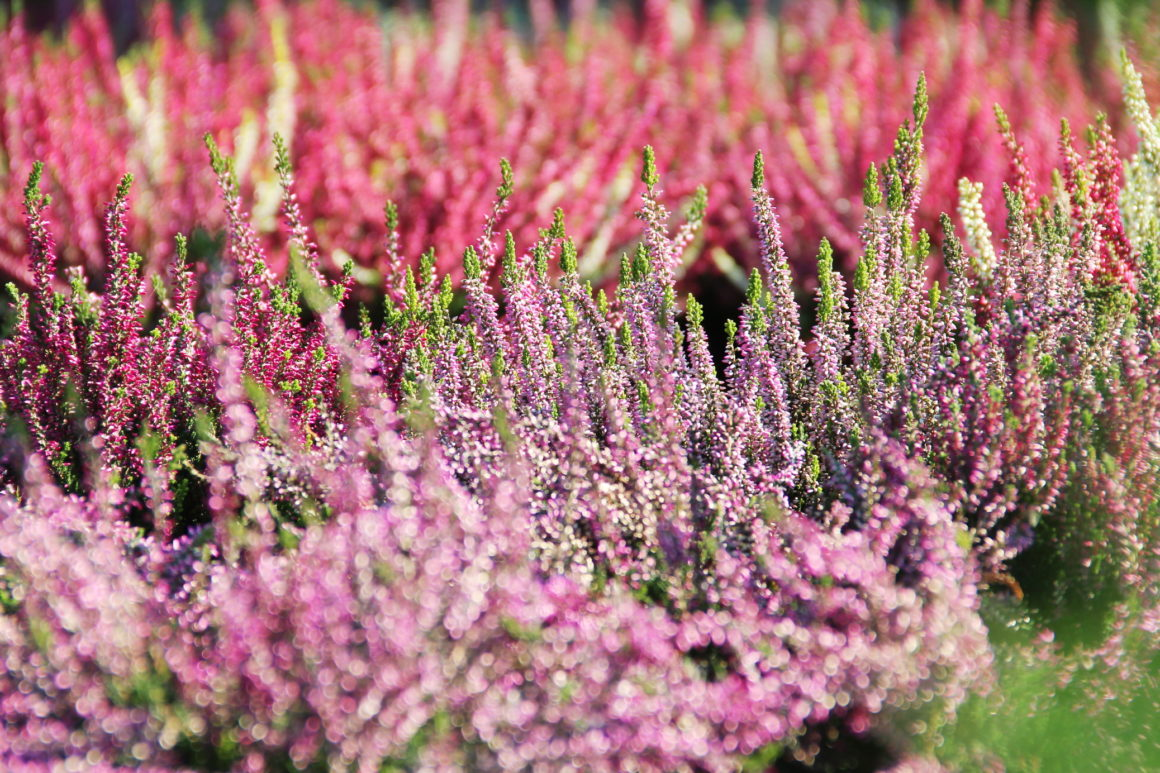 NA CZASIE – Jesień inspiruje kolorami