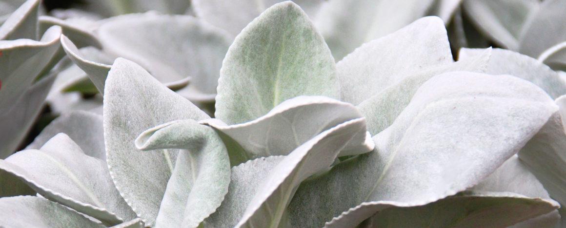 AKTUALNOŚCI – Rośliny ogrodowe