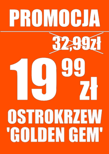 Ostrokrzew karbowanolistny (ilex crenata) 'Golden Gem' - promocja