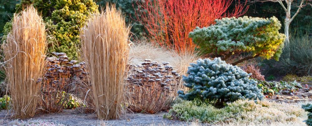 ciepła zima w ogrodzie okrywanie roślin