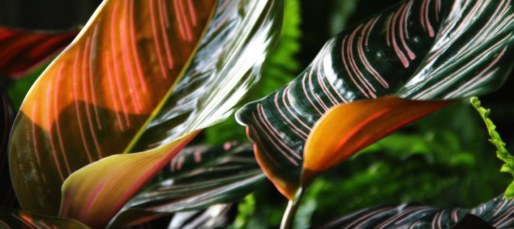 rośliny domowe i dekoracje