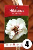 Hibiscus in cultivars 30cm
