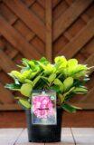 Rhododendron in soorten
