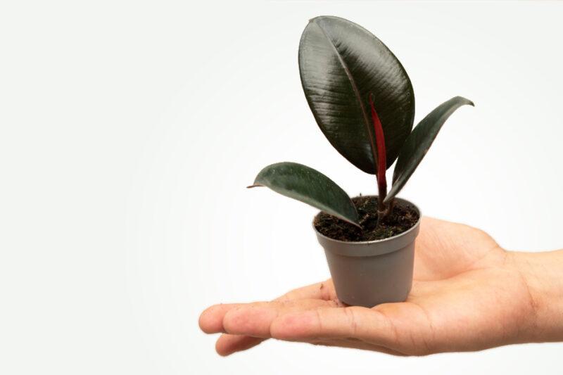 rośliny domowe i ogrodowe sklep internetowy