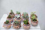 Sukulent w ozdobnej doniczce ceramicznej (Succulents Mix) SAN JOSE