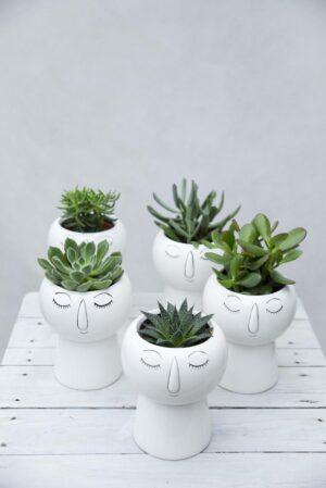 Sukulent w doniczce ceramicznej (Succulents Mix) DONICZKA GŁOWA H15 P9