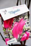 710-00958 Magnolia 'Susan' Magnolia 'Susan' 2