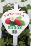 130-00891 POZIOMKA 10-PAK (BARON) (2)