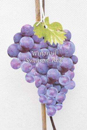 710-01212-Vitis-Swenson-Red