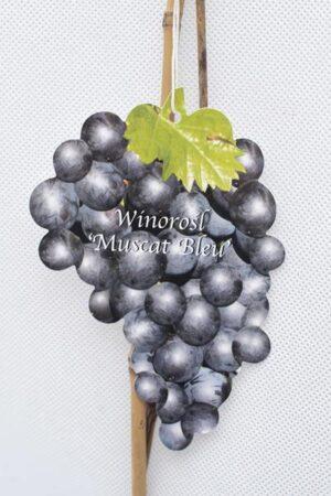 710-01221-Vitis-Muscat-Blen