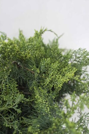 710-07244-Juniperus-virginiana-Grey-Owl