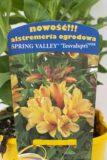 710-00060 Alstroemeria Spring Valley'Tesvalspri' C2 (2)
