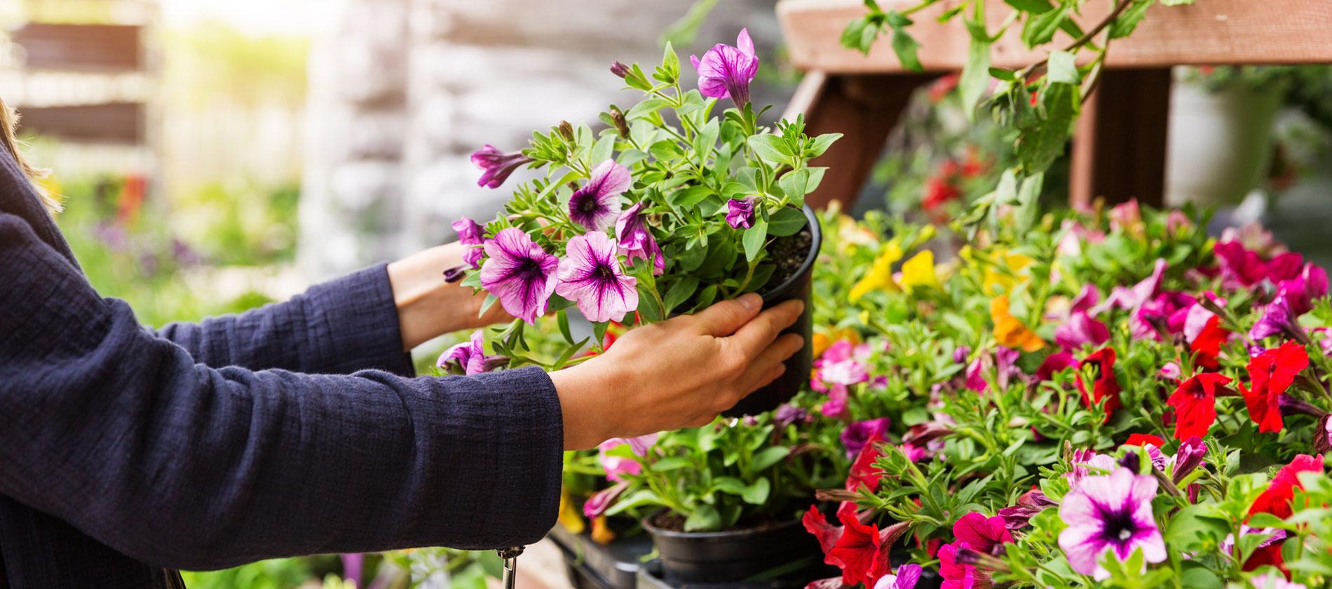 Centrum Ogrodnicze tracz Sklep internetowy z roślinami