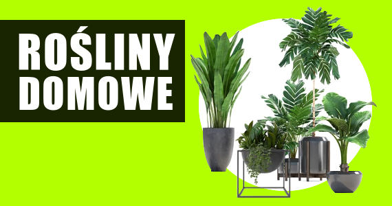 rośliny domowe sklep ogrodniczy internetowy sklep z roślinami