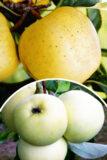 Jabłoń 'Oliwka Żółta' (łac. Malus domestica 'Oliwka Żółta') Papierówka